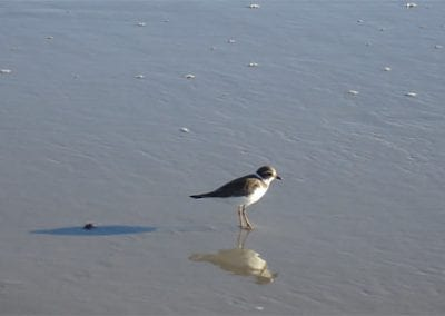 Cape May Nature- small bird standing on beach