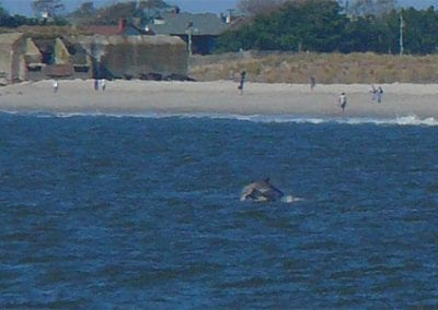 Cape May Nature- Dolphin