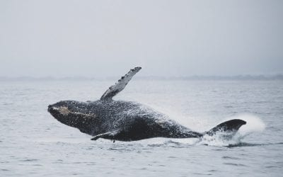 Nature in Cape May: Birding and Whale Watching